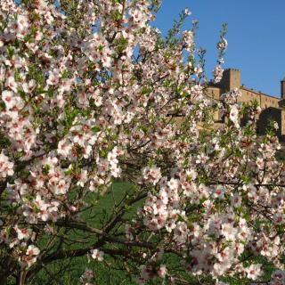 Florejacs ja està ben florit: tot apunt per la Fira de la Flor del 2 d'abril (wwwl.florejacs.cat)