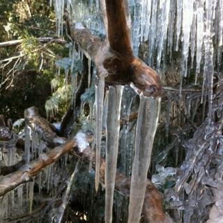 Gelades al Parc Natural del Parc de Sant Llorenç del Munt i Serra de l'Obac