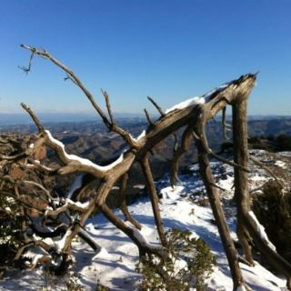 Imatge de neu i gel al Parc Natural del Parc de Sant Llorenç del Munt i Serra de l'Obac