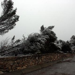 Arbres afectats per la ventada del desembre coberts de neu a Sabadell.