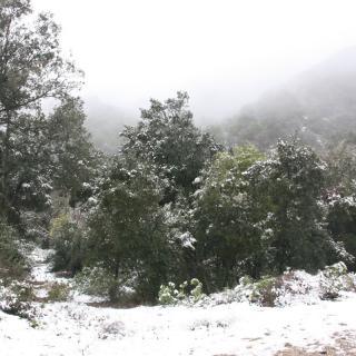 El paratge natural de Poblet, tot nevat