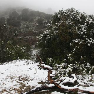 Les muntanyes de Poblet, nevades