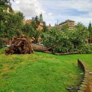 Un arbre caigut a Girona