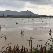 Gran extensió d'aigua a la plana de Montgrí GISELA PLADEVEYA