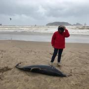 Un dofí a l'Estartit aquest diumenge