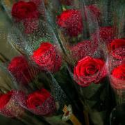 Roses en una paradeta de Sant Jordi