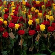Roses vermelles i grogues