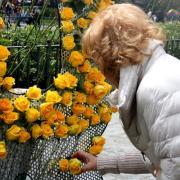 Una persona deixa una rosa al mural instal·lat per Òmnium a la plaça de Catalunya