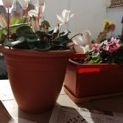 sóc la Rosa de Canet de Mar,estic fent els encreuats i prenen el sol,tota sola, quedeu-vos a casa, gràcies,
