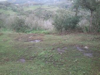 Restes dels purins abocats en una fotografia facilitada pels Agents Rurals de la Generalitat