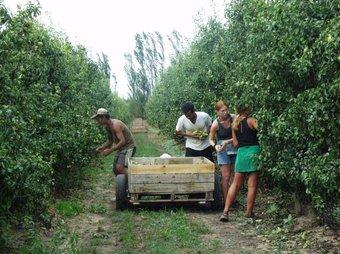 L'economia submergida és palesa en el sector agrícola Foto:Arxiu
