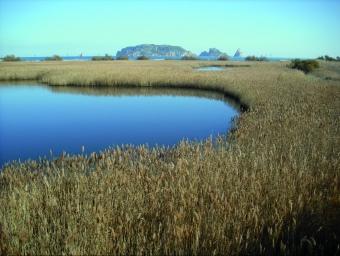 Vista de les illes Medes des de la llacuna del Ter Vell (punt número 7 de l'itinerari de descoberta).  Foto:ANG