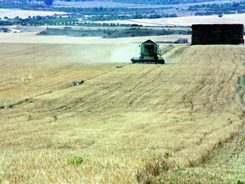 La reforma de la PAC beneficia activitats agrícoles extensives.  Foto:ARXIU