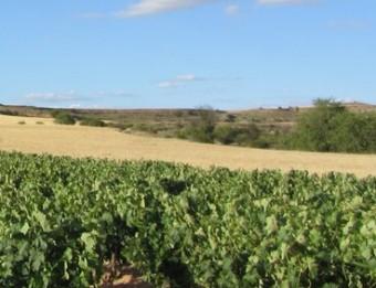 La Ribera compte amb 21.000 hectàrees de vinyes.  Foto:M,.J.R.