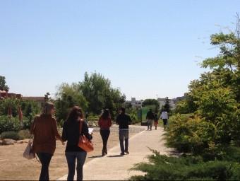 Un passeig pel món forestal és el que els visitants es troben a l'Arborètum de Lleida. Foto:ARXIU