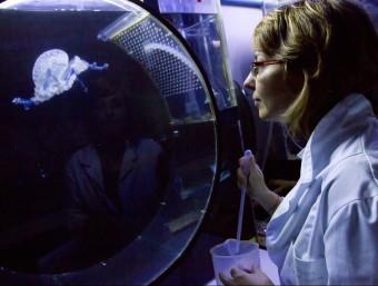 Una investigadora en un laboratori de l'Institut de Ciències del Mar de Barcelona.  Foto:ALBERT SALAMÉ