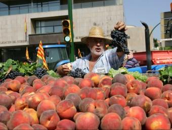 Entre els anys 2005 i 2012 les exportacions de fruita augmenten quasi un 60%.  Foto:ARXIU