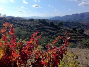Injecció milionària la que farà un grup inversor nord-americà que ha quedat captivat per les vinyes del Priorat.