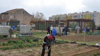 La població veïna de Sant Cugat ja destina des del 2008 parcel·les d'horts per a jubilats a Can Mates Foto:AJ. DE SANT CUGAT