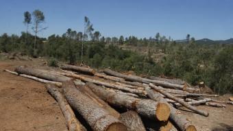 Imatge d'arxiu del bosc de Can Deu sis mesos després de la ventada Foto:ORIOL DURAN