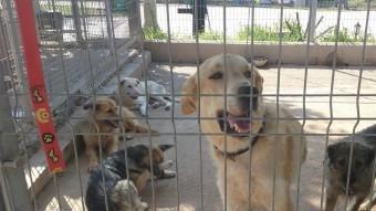 El centre de Torredembarra disposa de condicions més adequades pels animals Foto:CEDIDA