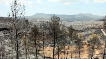 Massa forestal cremada en un primer terme i zona afectada al fons, vista des de la carretera de Can Massana Foto:ACN