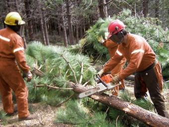 Tres operaris en un anterior taller de silvicultura. Foto:B. SILVESTRE