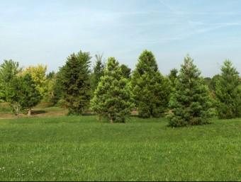 Una imatge del bosc de sequoies de l'Arborètum de Lleida Foto:ACN
