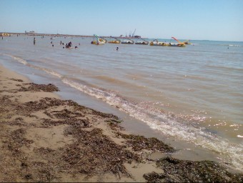 La bona qualitat de laigua ha estat la causa que ha determinat la proliferació dalgues a la platja