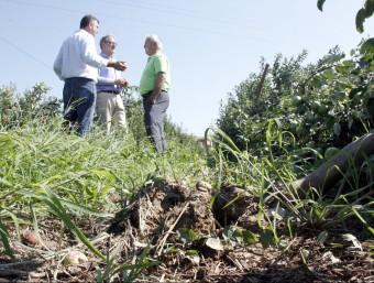 L'alcalde accidental, Fèlix Larrosa, va visitar ahir explotacions afectades. Foto:LAURA CORTÉS (ACN)