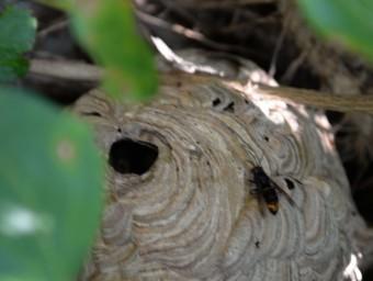 Detalla del vesper trobat a Santa Pua  Foto:JACINT GARRIGOLAS