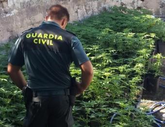 La plantació que els agents van localitzar a la masia Foto:G.C