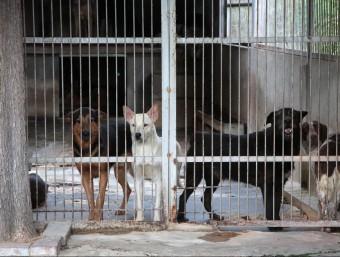 Imatge d'arxiu de la protectora d'animals de Figueres. Foto:JOAN SABATER
