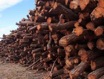 Dipòsit de biomassa a Les Fermoses de Castalla. Foto:CEDIDA ACCIÓ ECOLOGISTA