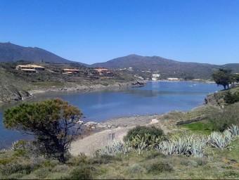 La platja de s'Illa de Portlligat, amb pites i figueres en primer terme, que s'hauran de retirar Foto:EL PUNT AVUI