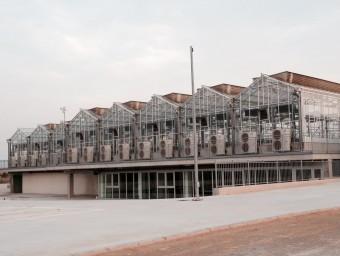 Noves instal·lacions de l'hivernacle de la Universitat d'Alacant. Foto:CEDIDA