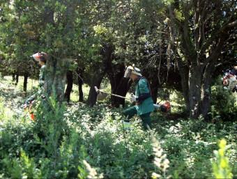Els treballadors de La Fageda Fundació, en acció en una de les zones forestals on s'aplica el programa. Foto:J.C
