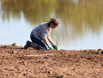 Dissabte passat, una tretena de voluntaris van participar en la reforestació de l'entorn de les dues llacunes naturals que s'han creat per recuperar la flora i la fauna autòctona. Foto:J.M.F.