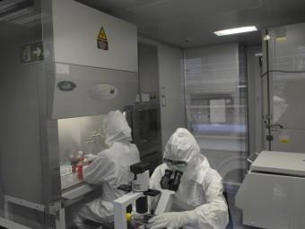 La Universitat de Barcelona està preparada per dur a terme teràpia avançada en la recerca.  Foto:ARXIU