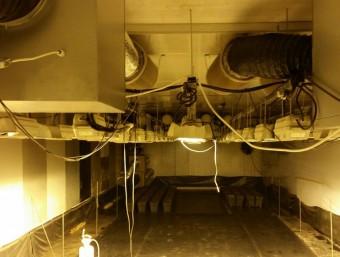 La plantació estava instal·lada en una nau del carrer Castell de Bellaguarda de Girona, al barri de Taialà Foto:EL PUNT AVUI
