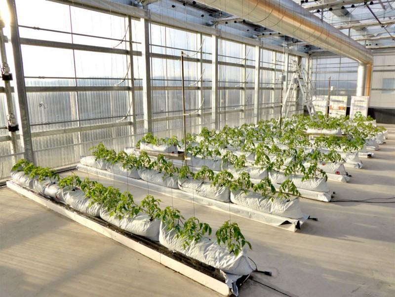 Al terrat de l'edifici de l'ICTA, el grup Sostenipra materialitza el seu projecte d'agricultura vertical.  Foto:ARXIU