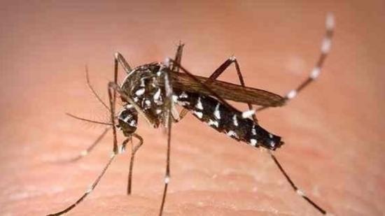 Una imatge del mosquit tigre Foto:ep
