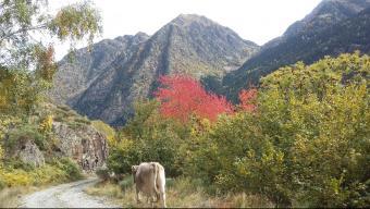 Muntanyes comunals de les Selves de Lladorre i les Bordes d'Ison al Pallars Sobirà Foto:XAVIER CATALÀ/TES